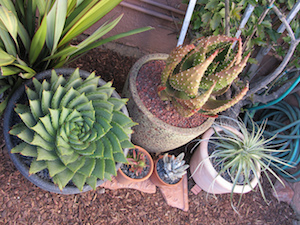 Florida-Friendly Plants That Are Perfect For Containers