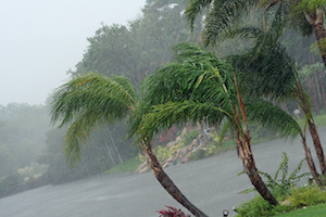 5 Tips To Hurricane Proof Your Florida Panhandle Landscape