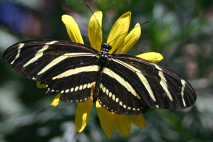 attracting wildlife to florida gardens resized 600