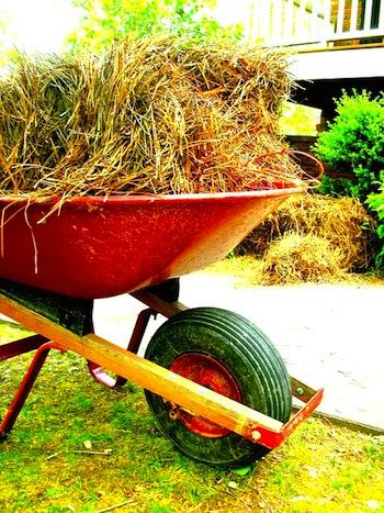 pine straw florida panhandle landscape maintenance