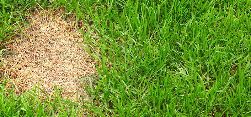 What Insects Are Eating My Lawn?