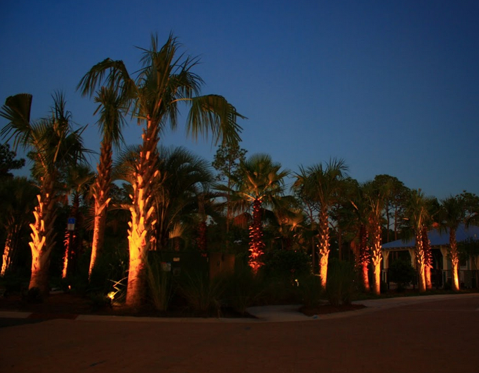 Florida's beautiful palm trees lit up in the night